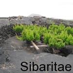 Bodegas El Grifo: Desde 1775–D.O.Lanzarote-La Herencia del Volcán