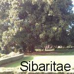 Arboles_
